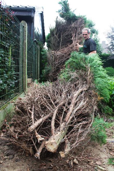 Grondwerken: verhakselen van bomen